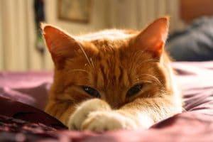 แมวส้มมีสัญลักษณ์mที่หน้าผาก