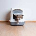 4 ขั้นตอนพิชิตปัญหาแมวกระเพาะปัสสาวะอักเสบ