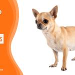ตกลงท้องไม่ท้อง 6 วิธีสังเกตอาการสุนัขท้อง ดูจากอะไรได้บ้าง